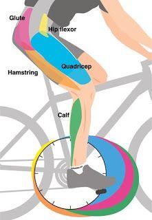 biomecanica-rodilla-del-ciclista